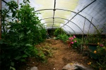 Polytunnel at the Centre for Alternative Technology, Machynlleth, Powys