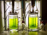 moss bioreactor